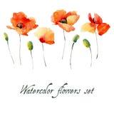 Σύνολο λουλουδιών παπαρουνών watercolor σε ένα άσπρο υπόβαθρο Στοκ Εικόνες