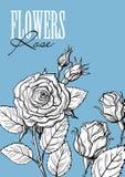 Σύνολο λουλουδιών τριαντάφυλλων απεικόνιση αποθεμάτων
