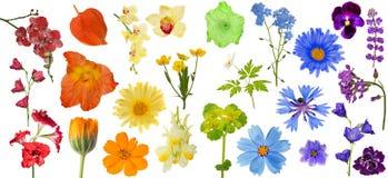 Σύνολο λουλουδιών χρώματος ουράνιων τόξων που απομονώνεται στο λευκό Στοκ Εικόνες