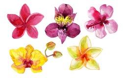 Σύνολο λουλουδιών watercolor που απομονώνεται στο λευκό Στοκ Φωτογραφία
