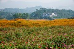 Σύνολο παγκόσμιων κήπων λουλουδιών Banan Chongqing των λουλουδιών στην πλήρη άνθιση Στοκ φωτογραφία με δικαίωμα ελεύθερης χρήσης