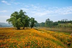 Σύνολο παγκόσμιων κήπων λουλουδιών Banan Chongqing των λουλουδιών στην πλήρη άνθιση Στοκ Φωτογραφίες