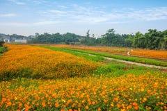 Σύνολο παγκόσμιων κήπων λουλουδιών Banan Chongqing των λουλουδιών στην πλήρη άνθιση Στοκ Εικόνα