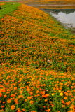 Σύνολο παγκόσμιων κήπων λουλουδιών Banan Chongqing των λουλουδιών στην πλήρη άνθιση Στοκ εικόνες με δικαίωμα ελεύθερης χρήσης