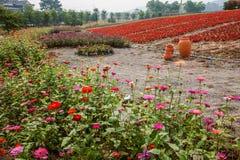 Σύνολο παγκόσμιων κήπων λουλουδιών Banan Chongqing των λουλουδιών στην πλήρη άνθιση Στοκ φωτογραφίες με δικαίωμα ελεύθερης χρήσης