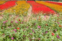 Σύνολο παγκόσμιων κήπων λουλουδιών Banan Chongqing των λουλουδιών στην πλήρη άνθιση Στοκ Φωτογραφία