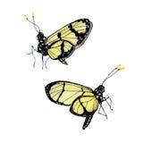 Σύνολο πεταλούδας watercolor δύο Στοκ Φωτογραφίες