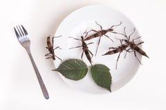 Σύνολο πιάτων των εντόμων στο έντομο για να φάει το εστιατόριο Στοκ φωτογραφία με δικαίωμα ελεύθερης χρήσης