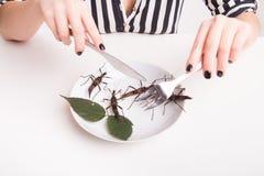 Σύνολο πιάτων των εντόμων στο έντομο για να φάει το εστιατόριο Στοκ εικόνα με δικαίωμα ελεύθερης χρήσης
