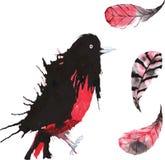 Σύνολο - πουλί watercolor oriole, hand-drawn σκίτσο της τεχνικής Στοκ εικόνες με δικαίωμα ελεύθερης χρήσης