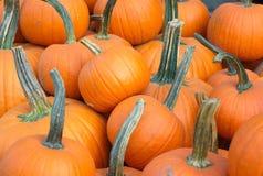 Σύνολο πολλών πορτοκαλί κολοκυθών - δείτε για αποκριές ή την ημέρα των ευχαριστιών Στοκ φωτογραφία με δικαίωμα ελεύθερης χρήσης