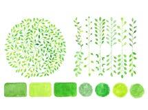 Σύνολο πράσινου λογότυπου watercolor Φύλλα, διακριτικά, κλάδοι Στοκ Εικόνες