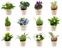 Σύνολο πράσινων εγκαταστάσεων και λουλουδιού σπιτιών Στοκ εικόνες με δικαίωμα ελεύθερης χρήσης