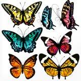 Ζωηρόχρωμη συλλογή των διανυσματικών ρεαλιστικών πεταλούδων για το σχέδιο ελεύθερη απεικόνιση δικαιώματος