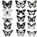 Σύνολο ρεαλιστικών διανυσματικών πεταλούδων για το σχέδιο Στοκ φωτογραφία με δικαίωμα ελεύθερης χρήσης