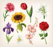 Σύνολο ρομαντικών θερινών λουλουδιών ελεύθερη απεικόνιση δικαιώματος