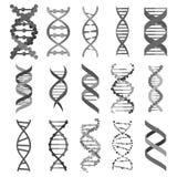 Σύνολο σημαδιών μορίων DNA, γενετικά στοιχεία και σκέλος συλλογής εικονιδίων διάνυσμα ελεύθερη απεικόνιση δικαιώματος
