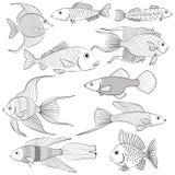 Σύνολο σκιαγραφιών περιγράμματος των ψαριών διανυσματική απεικόνιση