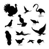 Σύνολο σκιαγραφιών πουλιών Στοκ φωτογραφίες με δικαίωμα ελεύθερης χρήσης