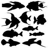 Σύνολο σκιαγραφιών των ψαριών ελεύθερη απεικόνιση δικαιώματος