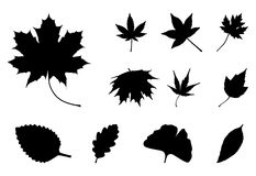 Σύνολο σκιαγραφιών φύλλων φθινοπώρου, σύμβολο, εικονίδιο διανυσματικό λευκό καρχ διανυσματική απεικόνιση