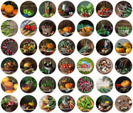 Σύνολο στρογγυλών εικονιδίων με τα λαχανικά Στοκ εικόνες με δικαίωμα ελεύθερης χρήσης