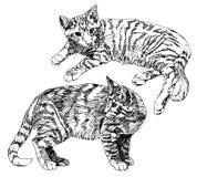 Σύνολο συρμένων χέρι γατακιών Στοκ Φωτογραφίες