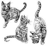 Σύνολο συρμένων χέρι γατακιών Στοκ φωτογραφίες με δικαίωμα ελεύθερης χρήσης