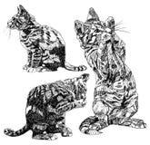 Σύνολο συρμένων χέρι γατακιών Στοκ Εικόνα