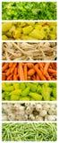 Σύνολο συλλογής φρέσκων λαχανικών Στοκ φωτογραφίες με δικαίωμα ελεύθερης χρήσης