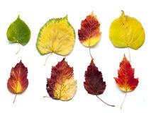 Σύνολο συλλογής όμορφων ζωηρόχρωμων φύλλων φθινοπώρου που απομονώνεται επάνω στοκ φωτογραφία με δικαίωμα ελεύθερης χρήσης