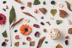 Σύνολο σύνθεσης φθινοπώρου των ξηρών εγκαταστάσεων Στοκ Φωτογραφίες