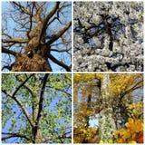 Σύνολο τεσσάρων δέντρων εποχών Στοκ φωτογραφία με δικαίωμα ελεύθερης χρήσης