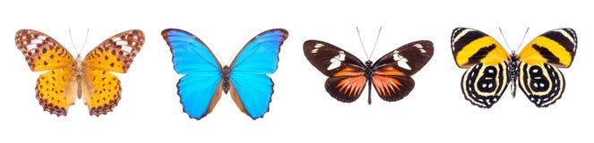 Σύνολο τεσσάρων ζωηρόχρωμων και όμορφων πεταλούδων Στοκ φωτογραφία με δικαίωμα ελεύθερης χρήσης