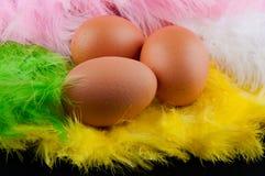 Σύνολο τριών καφετιών αυγών που βάζουν στα χρωματισμένα φτερά Στοκ εικόνα με δικαίωμα ελεύθερης χρήσης