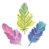 Σύνολο τριών φτερών watercolors Διανυσματική απεικόνιση