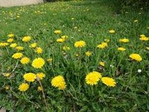 Σύνολο των ανοικτών λουλουδιών στο θερινό χρόνο Στοκ Φωτογραφία
