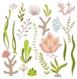 Σύνολο υποβρύχιων ιδιότροπων εγκαταστάσεων - φύκι, κοράλλι, λουλούδια απεικόνιση αποθεμάτων