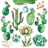 Σύνολο υψηλού - στοιχεία ποιοτικού χρωματισμένα χέρι watercolor για το σχέδιό σας με τις succulent εγκαταστάσεις, τον κάκτο και π ελεύθερη απεικόνιση δικαιώματος