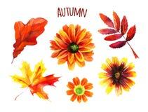 Σύνολο φθινοπώρου Watercolor φύλλων και λουλουδιών Στοκ φωτογραφίες με δικαίωμα ελεύθερης χρήσης