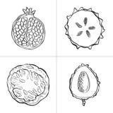 Σύνολο φρέσκων συρμένων χέρι φρούτων και λαχανικών και προϊόντων Στοκ Εικόνες