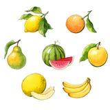 Σύνολο φρούτων watercolor Στοκ Φωτογραφίες