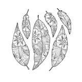 Σύνολο φτερού πουλιών με τη διακόσμηση μέσα στο λευκό Στοκ φωτογραφίες με δικαίωμα ελεύθερης χρήσης