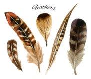 Σύνολο φτερών Watercolor Στοκ Εικόνες