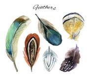Σύνολο φτερών Watercolor Στοκ εικόνες με δικαίωμα ελεύθερης χρήσης