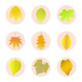 Σύνολο φύλλων φθινοπώρου εικονιδίων Στοκ Εικόνες
