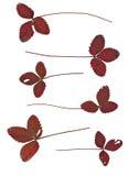 Σύνολο φύλλων φθινοπώρου που απομονώνεται στο άσπρο υπόβαθρο Στοκ φωτογραφία με δικαίωμα ελεύθερης χρήσης