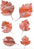 Σύνολο φύλλων φθινοπώρου που απομονώνεται στο άσπρο υπόβαθρο Απεικόνιση αποθεμάτων