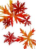 Σύνολο φύλλων φθινοπώρου στο άσπρο υπόβαθρο Ελεύθερη απεικόνιση δικαιώματος