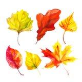 Σύνολο φύλλων φθινοπώρου Watercolor Στοκ φωτογραφίες με δικαίωμα ελεύθερης χρήσης